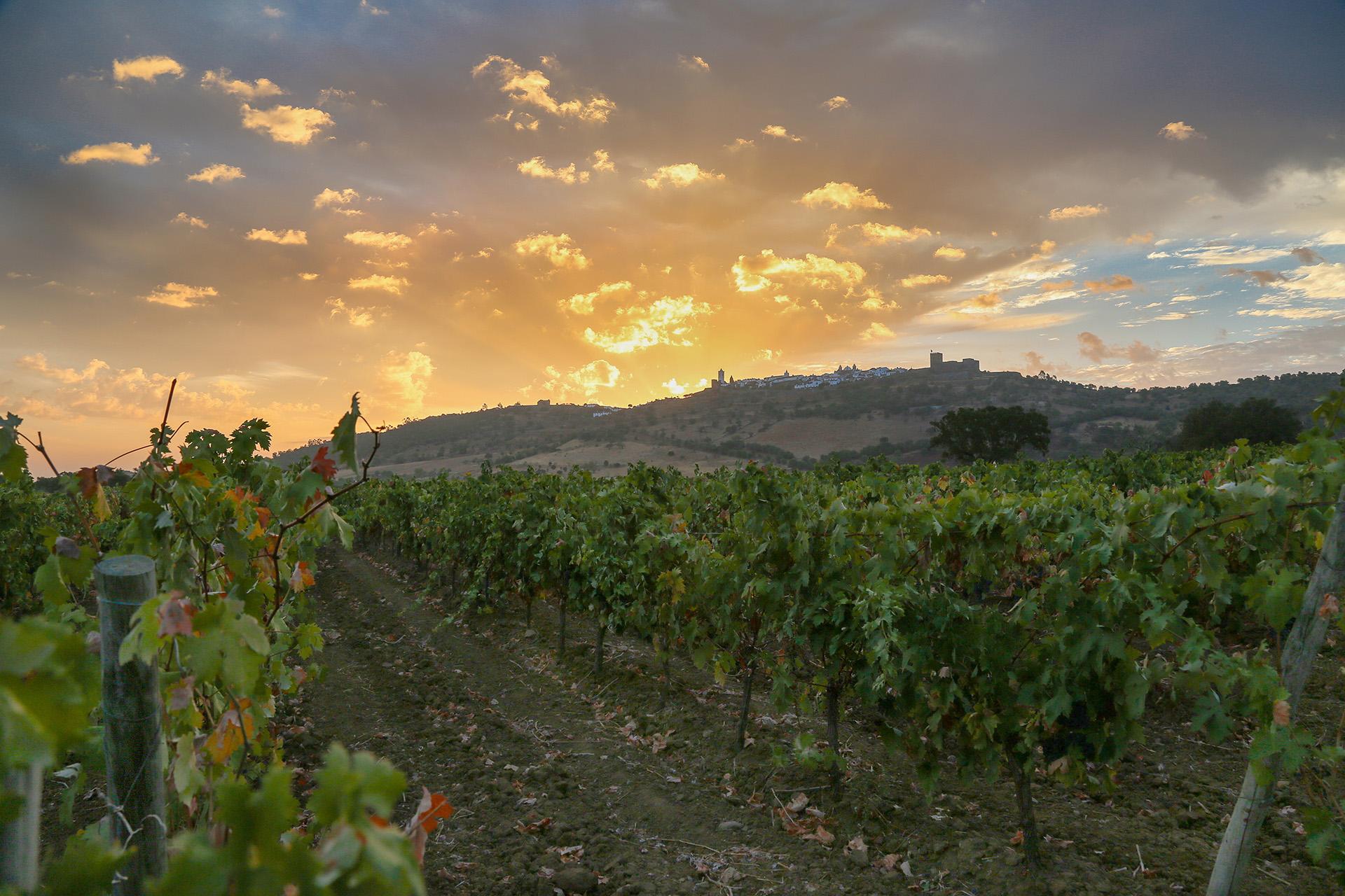Vinho e Enoturismo