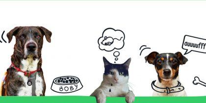 Campanha de esterilização de cães e gatos de companhia 2021